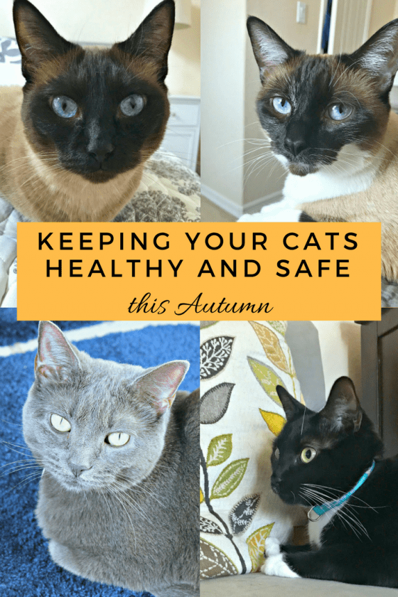 Keeping Your Cats Healthy And Safe This Autumn